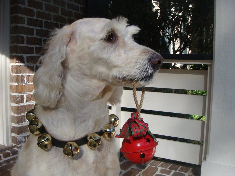 Alligator Hall, Sarah Sanford, pets, holiday dogs, party dogs, christmas dogs, christmas dog dress up